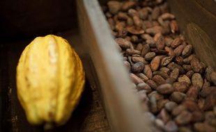 Une cabosse de cacao et ses fèves