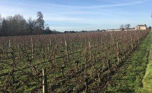 Le projet de collège jouxte les vignes du château Clément-Pichon.