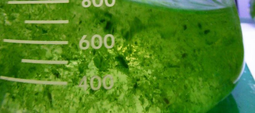 La version miniature du futur arbre à planctons toulousain.