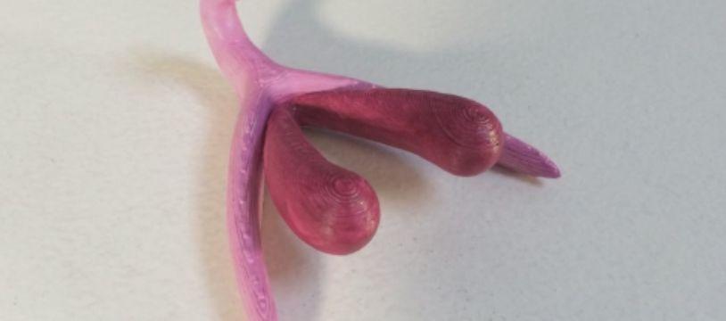 Longtemps absent des manuels d'anatomie, un clitoris vient d'être conçuen taille réelle et en 3D, l'objectif étant d'enseigner l'organe du plaisir féminin aux adolescents.