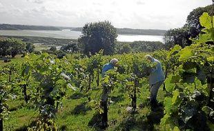 La vue sur la Rance est imprenable depuis les vignes du Garo à Saint-Suliac.