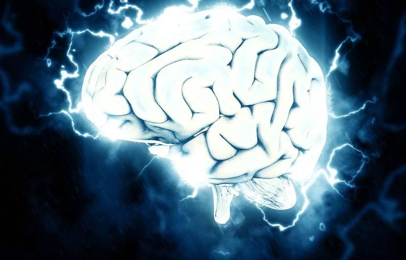 Pour la première fois, des mini-cerveaux créés en laboratoire dévoilent une activité électrique proche de celle des humains