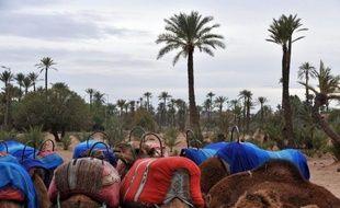 La vaste palmeraie millénaire de Marrakech est en grand danger: pénurie d'eau, urbanisation galopante, projets touristiques pharaoniques et parcours de golf menacent la survie de cet oasis, qu'un programme ambitieux de conservation tente de sauvegarder.