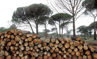 La combustion du bois de forêt pour produire de l'énergie est en fait plus polluante et dangereuse pour l'environnement que l'utilisation de l'essence ou du charbon, affirme mercredi Greenpeace Canada dans un rapport basé sur de nombreux travaux de recherche.