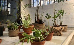 Merci Raymond a déjà une dizaine de plantes entreposées dans son