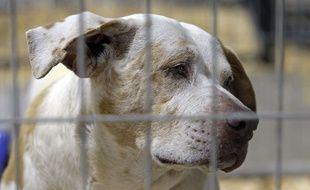 Un chien abandonné. Illustration.