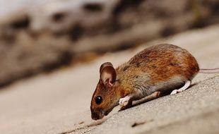 Des souris découvertes dans les cuisines du club de Crystal Palace.