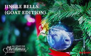 Capture d'écran de la reprise de Jingle Bells par des chèvres.
