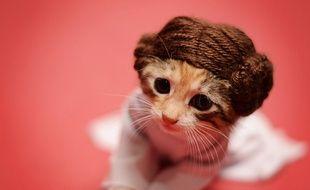 Un chaton déguisé en princesse Leia de «Star Wars» et photographié par Wendy Robbins.