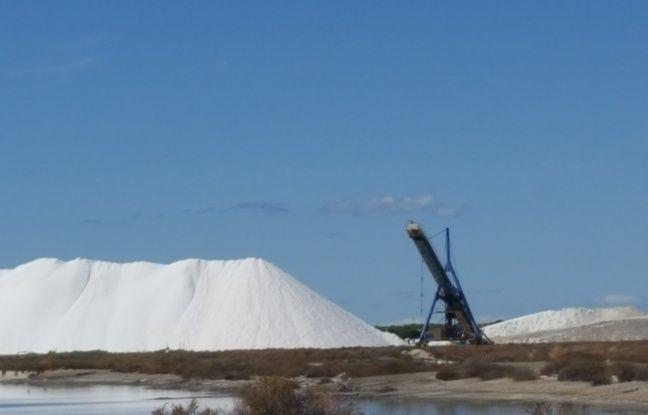 Une camelle, sur le site des Salins du midi, continent des milliers de tonnes de sel