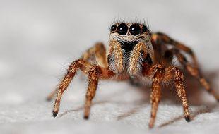 Une araignée. Illustration.