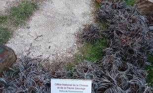 Ces pièges ont été saisis dans le Var par les garde-chasses.