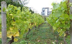 Le parc de Bercy aussi a ses vignes... Elles sont mêmes lus visibles des passants que celles de Montmartre.