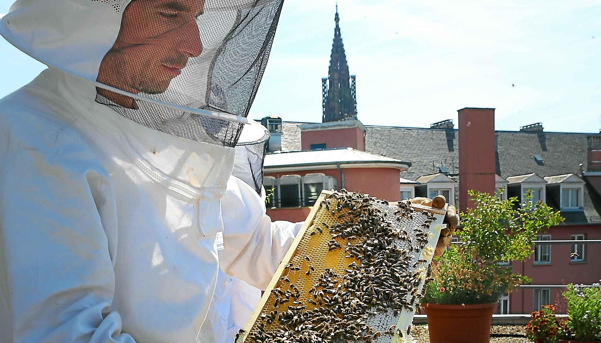 les abeilles aiment faire leurs courses en ville. Black Bedroom Furniture Sets. Home Design Ideas