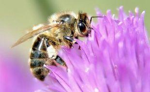 """La Commission européenne pourrait proposer d'interdire l'utilisation de certains pesticides après les conclusions """"inquiétantes"""" rendues mercredi par l'autorité européenne de sécurité des aliments (EFSA) sur leur impact létal pour les abeilles."""