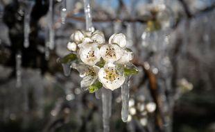 Le gel a provoqué d'importants dégâts dans les vergers en Drôme-Ardèche. Illustration.