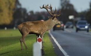 Des millions d'animaux sauvages meurent chaque année sur les routes