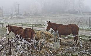 Des chevaux (Illustration)