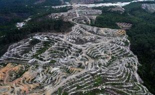 Photo aérienne du 24 février 2014 d'une province de l'île de Bornéo, en Indonésie, où la forêt vierge est détruite pour faire place à une plantation de palmiers à huile