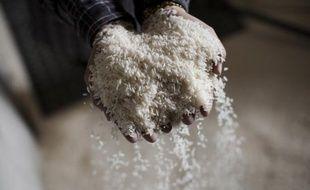 Deux brasseurs du Tarn lui ont fourni 20 kilos de semences venues du Japon... (Photo d'illustration).