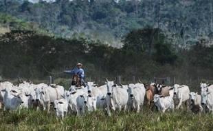 Un agriculteur déplace son bétail dans une ferme de Sao Felix do Xingu, dans l'Etat de Para, au nord du Brésil, le 8 août 2013