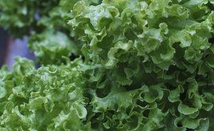 Des salades (illustration).
