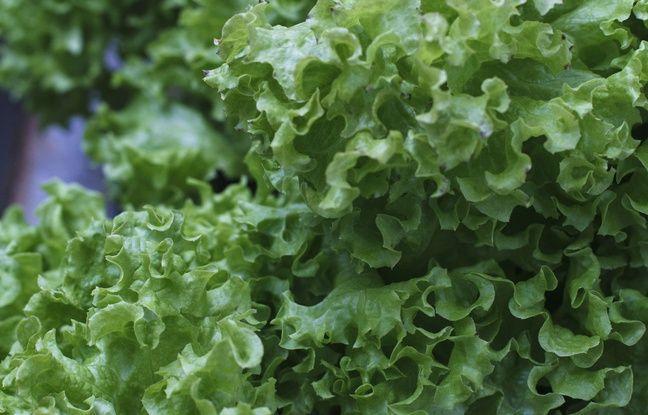 Narbonne: Près de 3 tonnes de cannabis cachées sous des salades, la plus grosse saisie de l'année