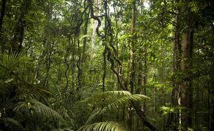 Illustration de la forêt amazonienne.