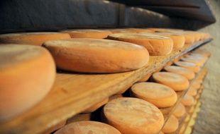 Les toxi-infections alimentaires causées par les salmonelles se traduisent par des troubles gastrointestinaux
