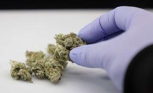 Dans la maison en ruines se trouvait un laboratoire de cannabis. Illustration.
