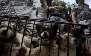 Des chiens mis en vente sur le marché de Yulin, en Chine.