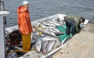 Un bateau de pêche espagnol ramène sa cargaison de thons rouges au port. (Photo illustration).