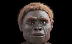Une reconstruction 3D du visage de «l'homme de Florès», découvert en 2003 en Indonésie.