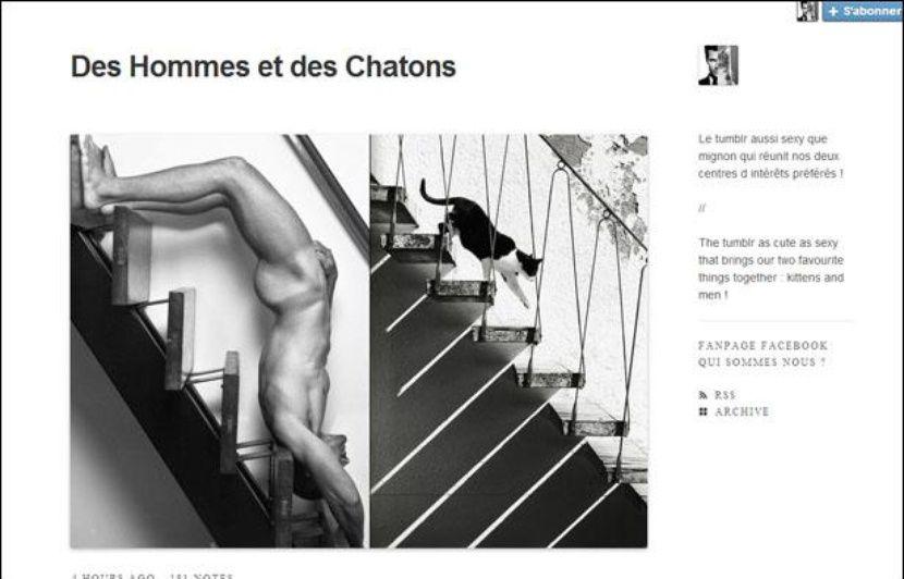 Des Hommes Et Chatons des hommes et des chatons» parmi les tumblr les plus partagés en 2013