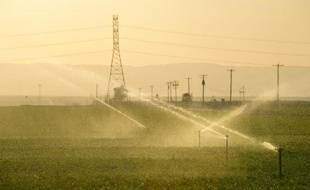Arrosage de champs de carottes, le 29 mars 2015, à Kern County en Californie, Etat de l'ouest américain en proie à une intense sécheresse qui dure depuis quatre ans