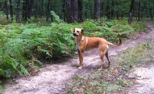 Nova a été kidnappée le 21 octobre avant d'être relâchée en forêt.