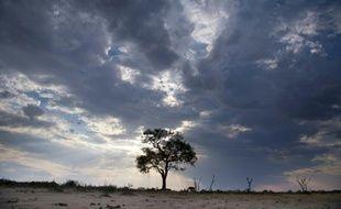 Un arbre et le ciel à perte de vue, le 16 novembre 2012 au parc national zimbabwéen de Hwange, où régnait le lion Cecil