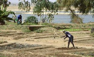Des Maliens travaillent des lopins de terre au bord du fleuve Niger, à Gao au Mali, le 30 mai 2015
