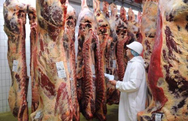 Un employé contrôle des carcasses de boeuf dans un abattoir en Bretagne, le 4 décembre 2013