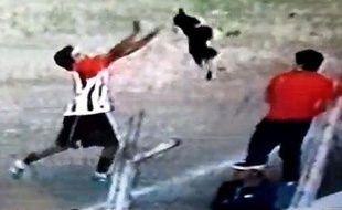 Le chien maltraité par un joueur argentin, le 9 juin 2013 en Argentine.