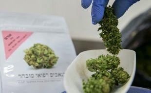 Une employée pèse des plants de cannabis dans l'enceinte de B.O.L (Breath of Life, souffle de vie) Pharma près de Kfar Pines en Israël, le 9 mars 2016