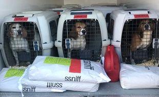 Au total, six beagles sont arrivés au refuge de Montpellier et autant à Vallérargues, dans le Gard.