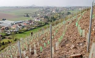 Les activités ont cessé depuis 1955 sur le terril 2bis à Bruay-la-Buissière. Une renaissance est en cours.