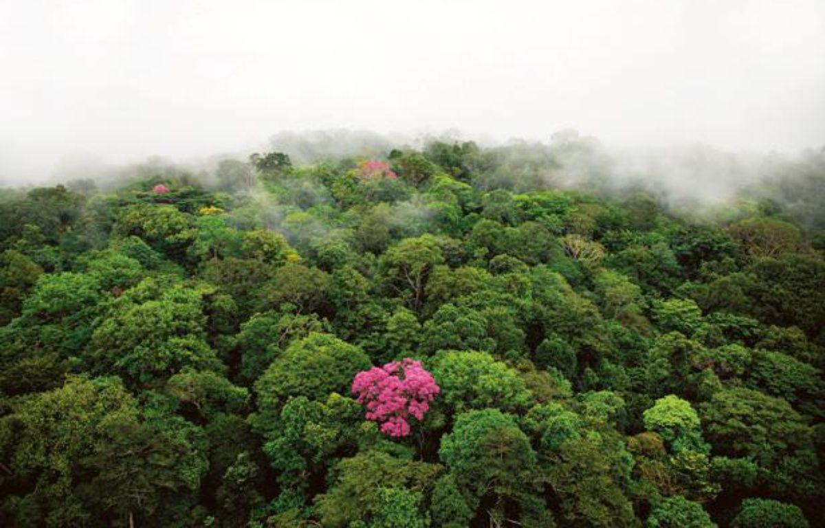 Une forêt vue du ciel. – Yann Arthus-Bertrand / Goodplanet