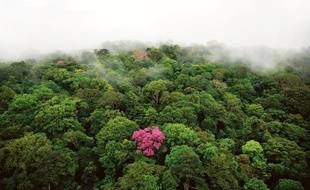 Une forêt vue du ciel.