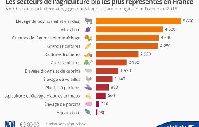 Les secteurs de l'agriculture bio les plus représentés en France.
