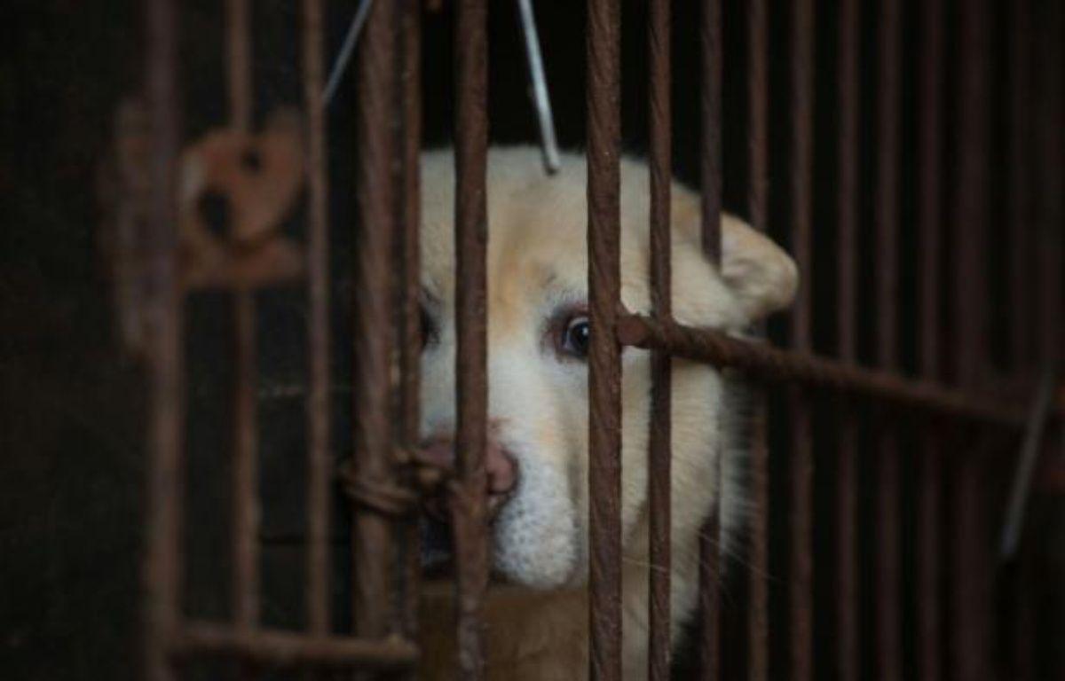 Le géant de la distribution Carrefour a retiré des lots de viande de chien qu'il vendait dans deux de ses hypermarchés chinois, à la suite de protestations d'associations de défense des animaux. – Ed Jones AFP