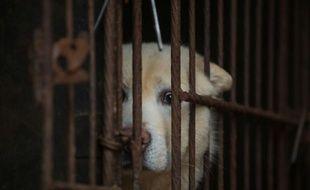 Le géant de la distribution Carrefour a retiré des lots de viande de chien qu'il vendait dans deux de ses hypermarchés chinois, à la suite de protestations d'associations de défense des animaux.