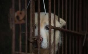 Un chien en cage(photo d'illustration