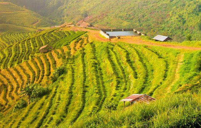 La province de Chiang Mai, qui donne son nom à la ville, est très appréciée des amoureux de la nature.